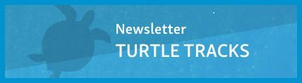 View Turtle Tracks Newsletters